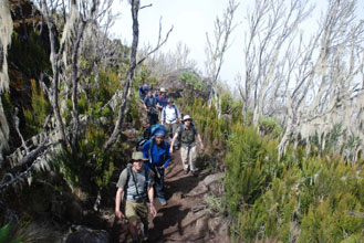 Climbing Kilimanjaro Day 2 - feature photo