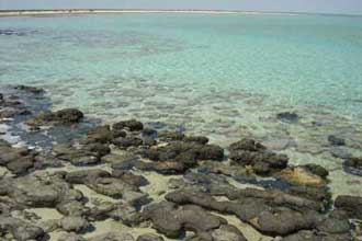Hamelin Pool, Stromatolites photo